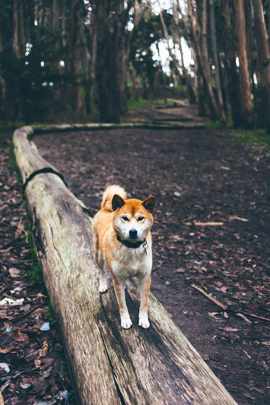 hunde gps tracker test